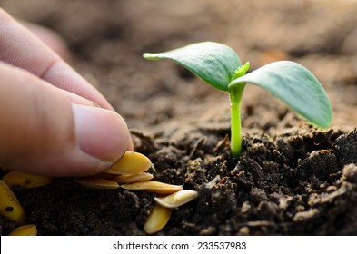 Close up seed and young plant growing with hand planting