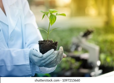 Close up of seedling in agronomist's hands with gloves and white coat in greenhouse with microscope in background. Plant protection and productivity improvement concept