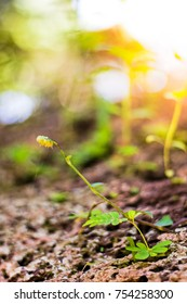 Close up of seedling sprouting from the ground Young plant in the morning light on nature background, growth in forest, new life small tree and sunshine.