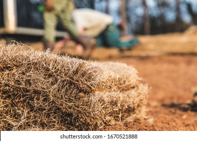 Close up selective focus shot of a pile of brown dormant sod grass laying on the dirt ground in wintertime at a landscaping job site with crew members working in the background out of focus