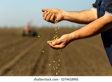 Close up of senior farmer with soybean seed in his hands.