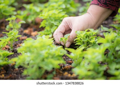 Close up of senior woman are gardening, take care of her plants.  Selected focus. Copy space.