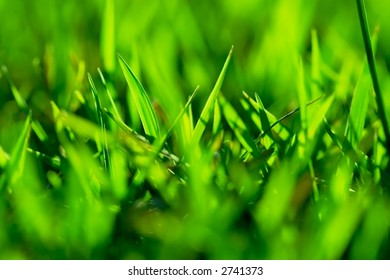 Close up shallow depth of field shot of grass - good abstract background