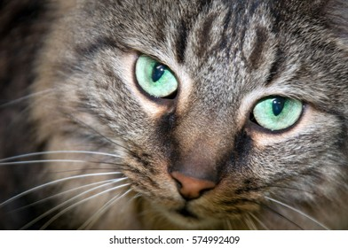 Close up of shelter cat hoping to find a home