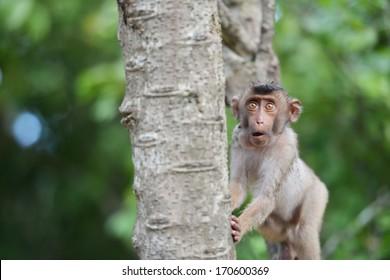 close up a shocked monkey on a tree