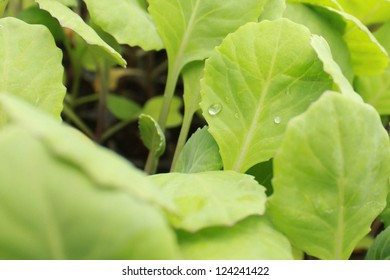 Close up shoot of green leafs