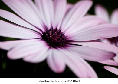 A close up shot of beautiful flower
