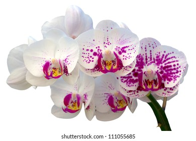 Close up shot of beautiful orchid flower