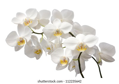 Close up shot of beautiful white orchid flower
