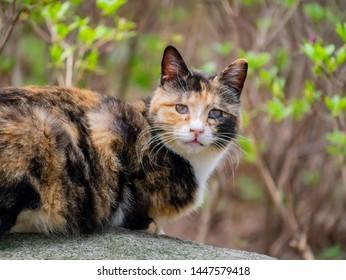 Close up shot of a beautiful wild cat at Busan, South Korea