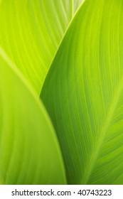 Close up shot of big green leaves.