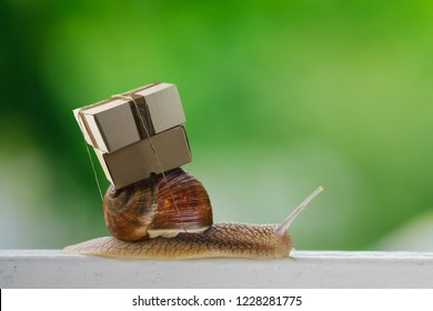 Close up shot of big snail carrying a bunch of boxes on a back. Speed delivery, transportation humorous concept. Mock up, copy space for your text.