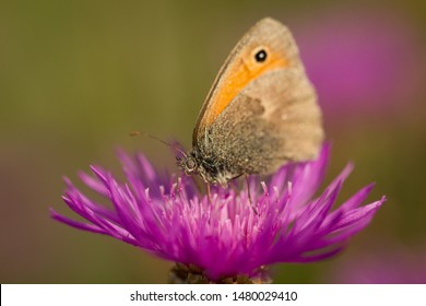 Close up shot of a butterfly sitting on a flower with violet blossoms.
