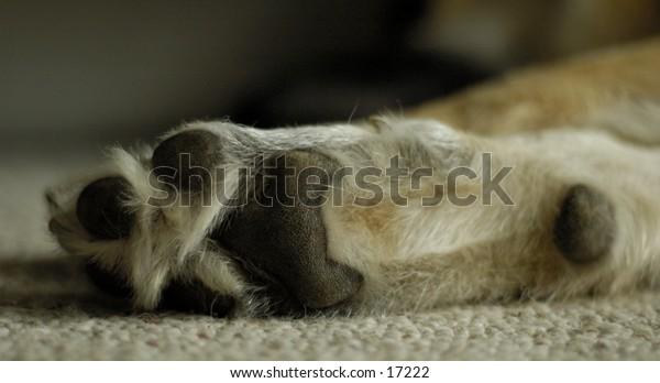 A close up shot of a dog paw