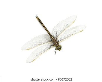 A close up shot of a dragon fly on white