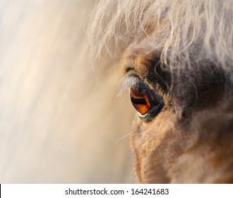 Close up shot - eye of miniature horse