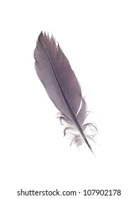 A close up shot of a feather
