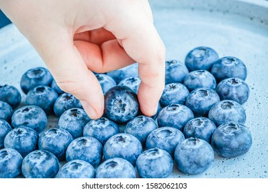 Close up shot of fingers holding a single blueberry a bunch of blueberries in the background. Concept of healthy food.