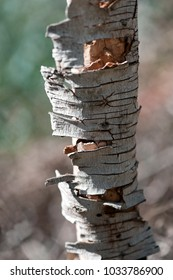 close up shot of a fragment of cracked tree bark