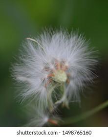 Close up shot of grass flower