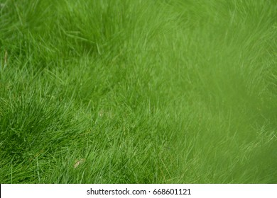 Close up shot of Green grass