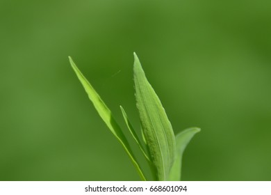 Close up shot of Green leave