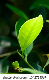 Close up shot of green leaves with bokeh background, nature background