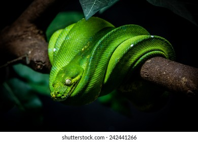 close up shot of a green snake is on a branch