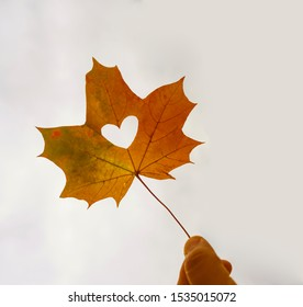 Close up shot of hand holding yellow leaf of heart shape with sun rays shining through it at light blue sky background. I love autumn concept. Copy space for inscription.