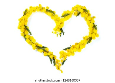 Close up shot of heart of mimosa flowers. Isolated on white.