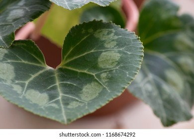 close up shot of the intereting patterns on a plant's leaves
