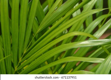 Close up shot of leaves