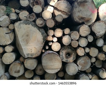 Close up shot of logs of wood