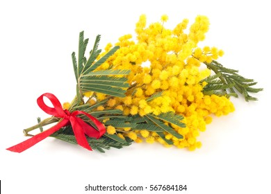 Close up shot of mimosa flowers. Isolated on white.