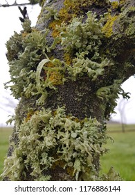 close up shot of multi colored lichen