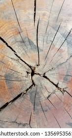 Close up shot of natural wood cut texture, tree ring.