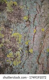 Close up shot of a natural wood texture