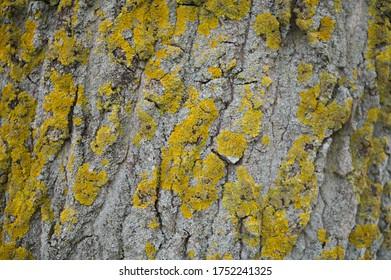 Close up shot of natural wood texture