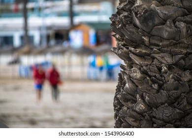 A close up shot of  palm tree bark with blurred background in Spain