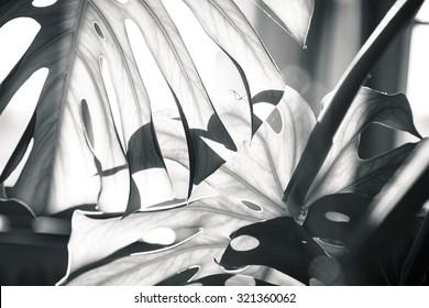 close up shot of a palm tree leaf