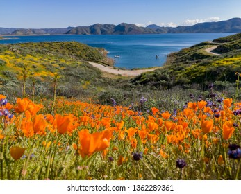 Close up shot of poppy flower blossom at Diamond Valley Lake, California