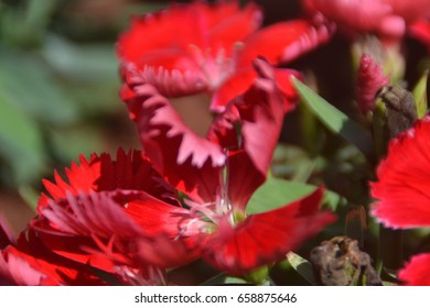 Close up shot of Red blooming flowers
