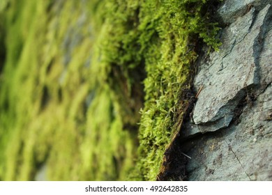 Up close shot of a rock surface with plants growing over the top.