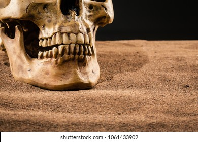close up shot of a scenic human skull on the desert sand with a dark night background