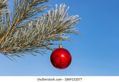 Close up shot of a single red shiny Christmas ball decoration hanging off a Christmas fir tree outside, partially covered in snow. Tree is also covered with snow. Blue sky as a background.