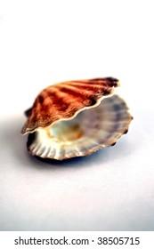 close up shot of a single shell