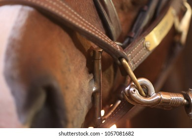Close up shot of softly focused horses mouth. Along with sharp focus of safety snap attached to the horses leather.  Clearly this is the focal point.
