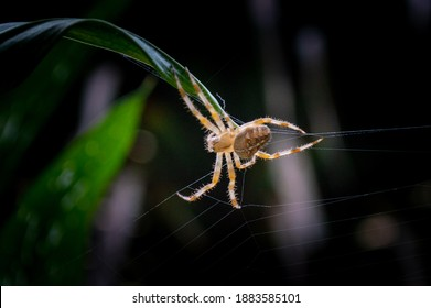 Close shot of a spider weaving its web