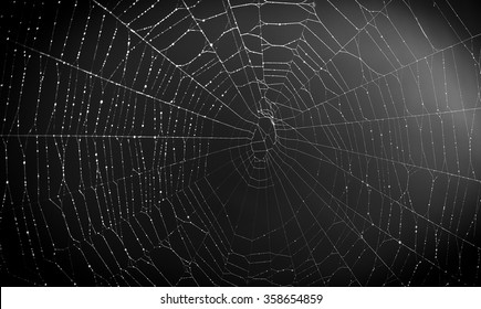 close up shot of a spider web in the dark