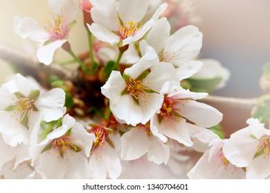 Close up shot of Spring bloom